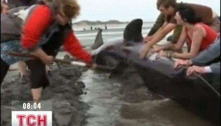 Около сотни дельфинов выбросились на берег Новой Зеландии