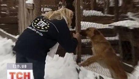Немецкая принцесса собирается молиться за украинских бездомных собак
