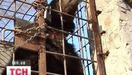 Многострадальный медведь Потап едет в центр реабилитации медведей