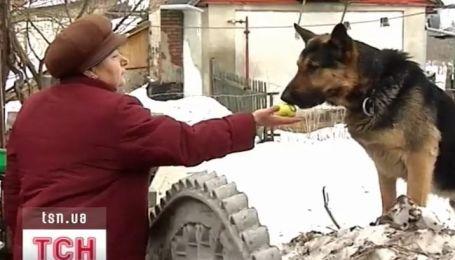 Пес спас жизнь 82-летней бабушки