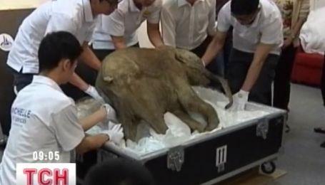 В Китай привезли мамонтенка Любу возрастом 42 000 лет
