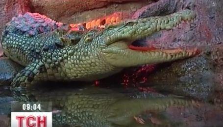 Уникальный крокодил поселился в Алуштинском аквариуме