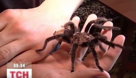 На Сумщине школьник увлекается разведением пауков