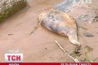 У Криму створили комісію з розслідування наймасовішої загибелі дельфінів