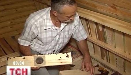 На Луганщине предлагают сон с пчелами