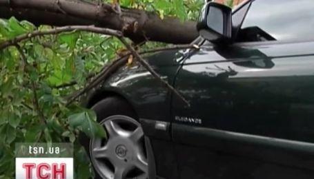 В Днепропетровске огромный каштан раздавил три автомобиля и порвал провода
