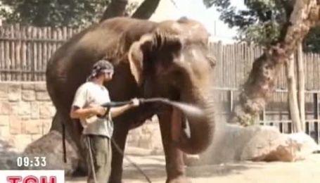 Угорці в спеку роздають воду та миють слонів