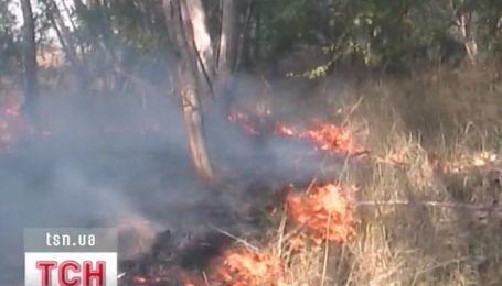 Около 550 гектаров леса выгорело в Херсонской области