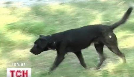 Стая диких собак напала на птиц в Херсонском гидропарке