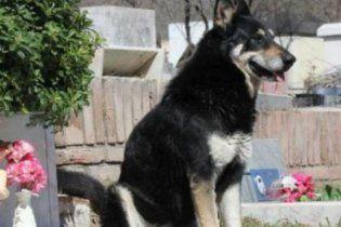 Собака сама нашла могилу хозяина, и живет на ней уже 6 лет