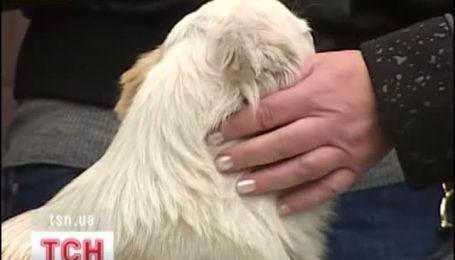 Загадкова історія дружби кішки з псом вразила киян