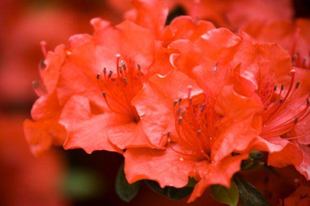 Комнатные растения, приносящие успех