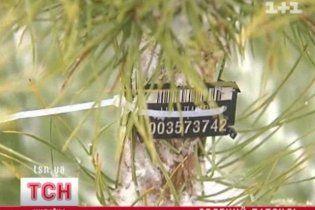 Покупая живую елку, украинцы рискуют оказаться в милиции