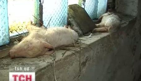На винницкой ферме замучивают животных