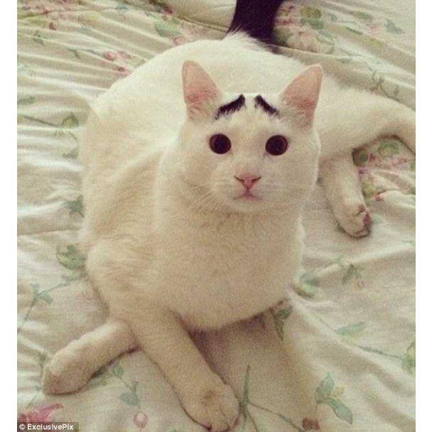Найсумніший кіт з бровами П'єро став новою зіркою інтернету