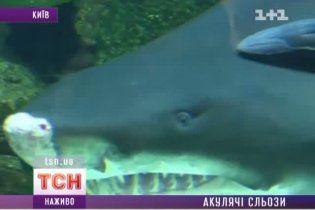 У Німеччині померла акула з київського ТРЦ