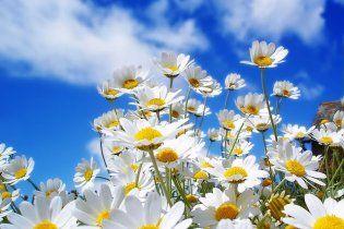Найближчими днями в Україні буде сонячно і тепло