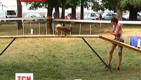 Красивейших беспородных собак выбирали в Днепропетровске