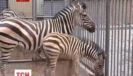 Бэби-бум в одесском зоопарке