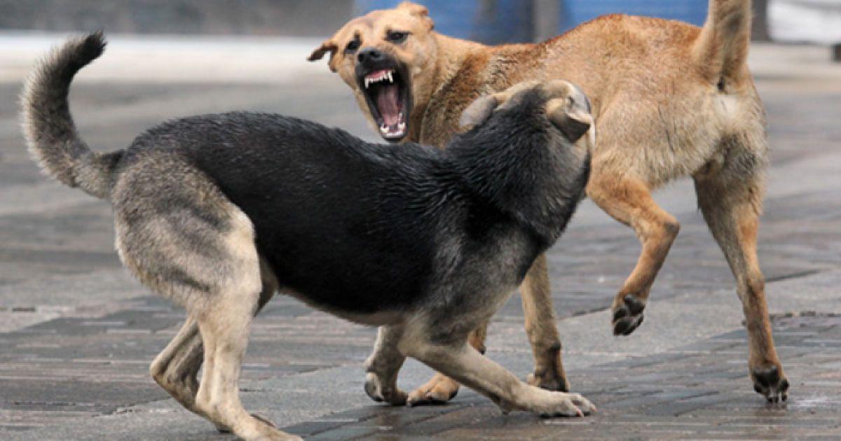 Нашли женщину и ребенка укусила собака нарын даже подозревают, что