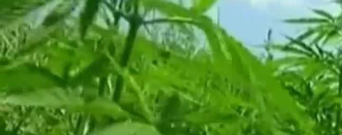Как выращивать коноплю скачать книгу