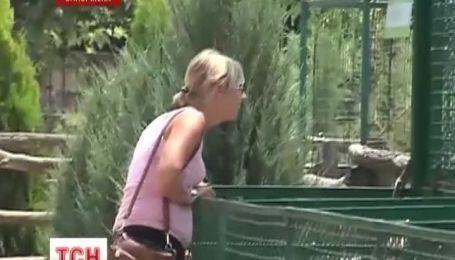 На Азовское побережье привезли белых тигров