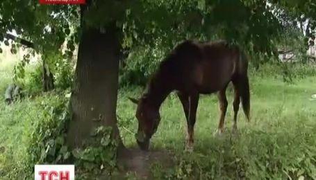 На Львівщині розстріляли табун коней