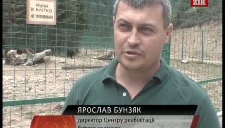 Медведи Закарпатья проходят реабилитацию
