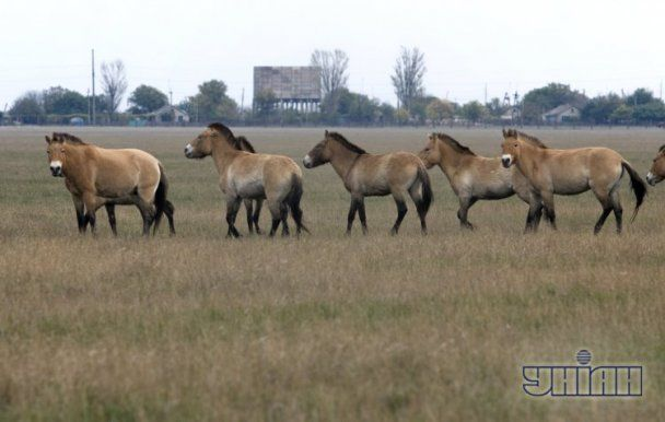 Horseshoers Forum