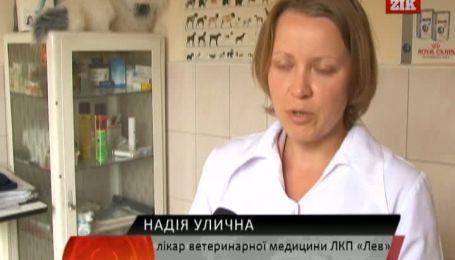 Коммунальщики Львова зарабатывают дважды на трупах домашних любимцев