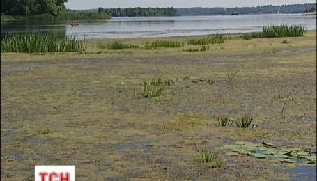 Водяний горіх знищив сотні тонн мальків