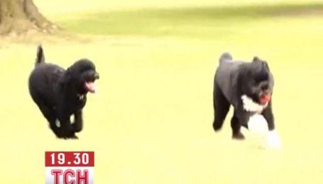Собаке президента США Барака Обамы завели подружку