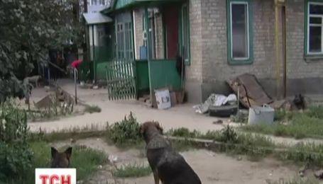 Масова втеча з притулку для тварин у Києві