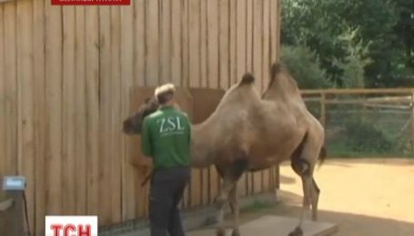Сотрудники Лондонского зоопарка взвесили и измерили зверей