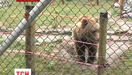 Медведицу спасли от жестоких издевательств