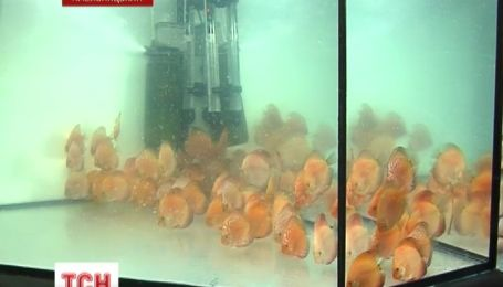 В Хмельницком продемонстрировали редких рыбок