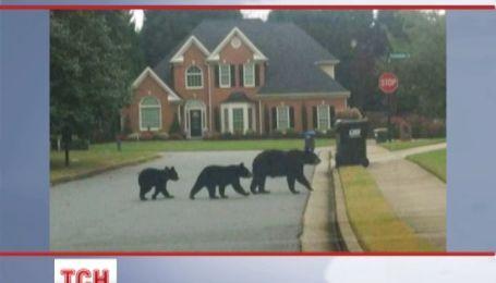 Медведи нападают на небольшие города в США