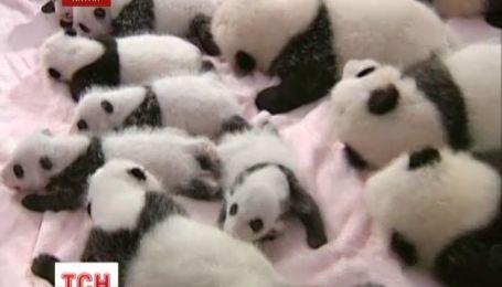 В Китае открыли ясли для панд