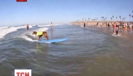В Калифорнии устроили соревнование по серфингу среди четвероногих