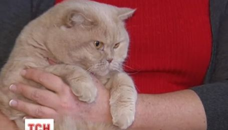 Британские ученые категорически запретили гладить кошек
