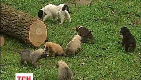 На Киевщине без мамы остались шестеро щенков