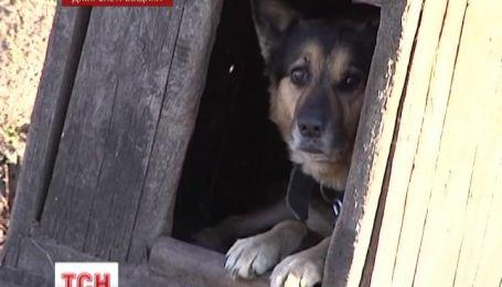 На Дніпропетровщині ціла родина стала жертвою скаженого собаки