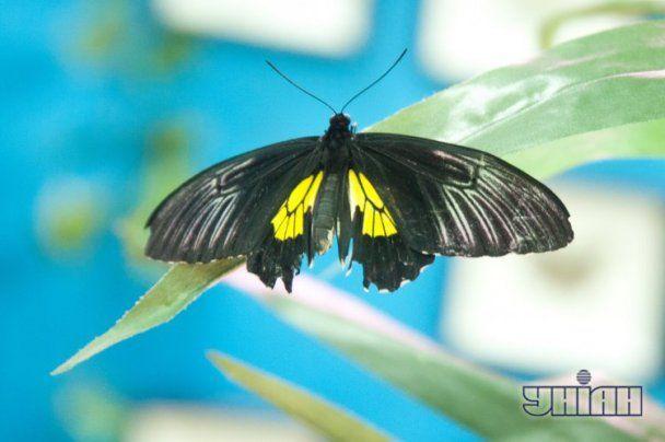 У Запоріжжі пройшла виставка неймовірно красивих метеликів, які так і просяться на руки