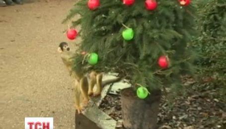 Для мавп із зоопарку Лондона наступили новорічні свята