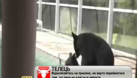 Дикие медведи, которые купались в бассейне во Флориде, покорили Интернет