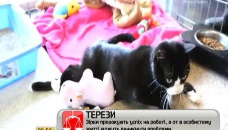 В Британии такса выходила парализованную кошку