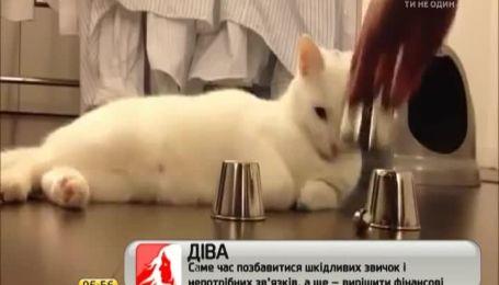 Американская кошка с легкостью выигрывает игру в наперстки
