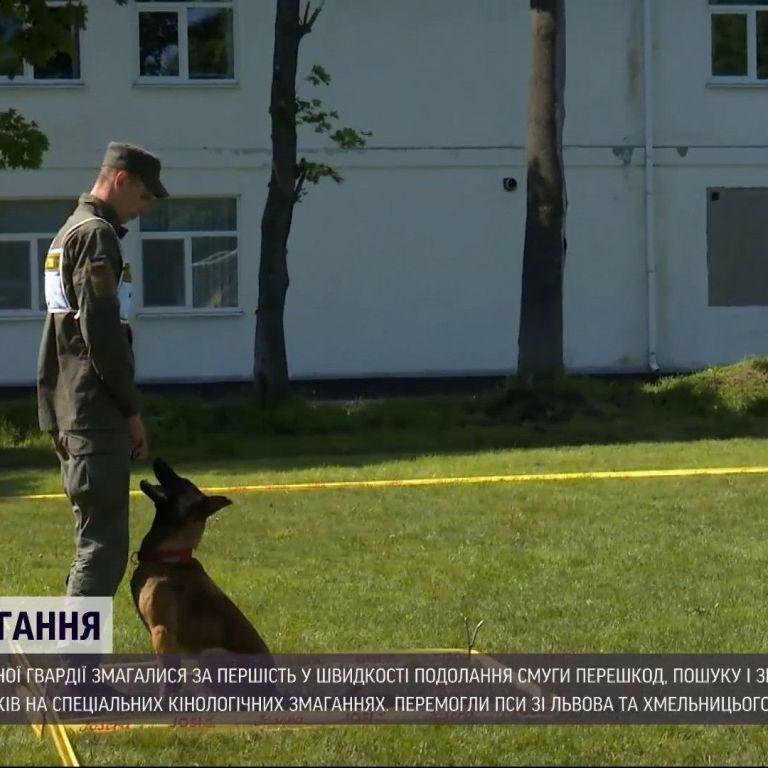 У Вінницькій області провели кінологічні змагання серед службових собак: з'явилось відео