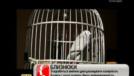 Попугай Василиса покорила Интернет исполнением украинского гимна