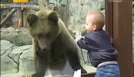 В столичном зоопарке проснулись медведи